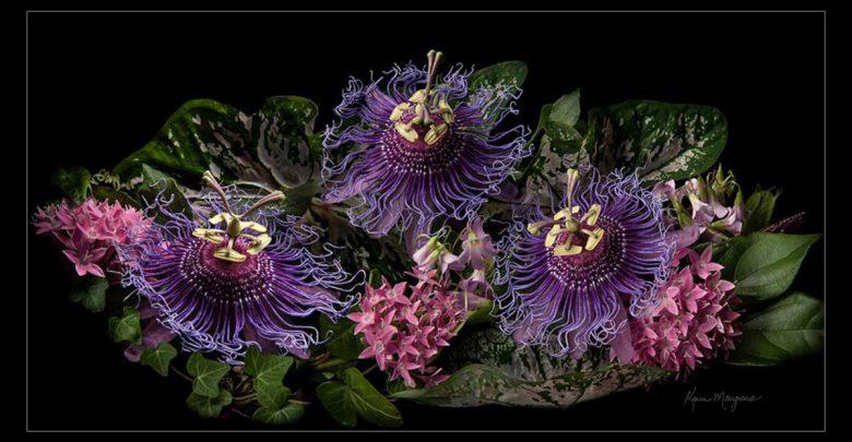 گیاهان دارویی برای اعصاب